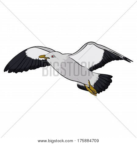 Colorful seagull bird vector illustration Seabird isolated on white background