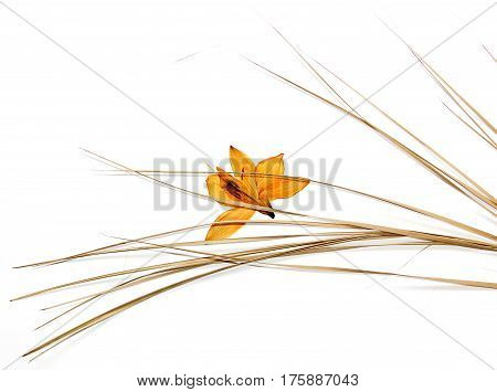 Dry Narcissus Isolated On White Background