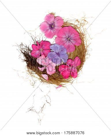Application, A Bouquet Of Dry Phlox And Grass
