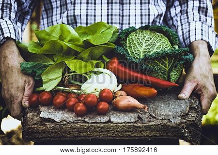 Organic vegetables. Farmers hands with freshly harvested vegetables. Fresh organic kale