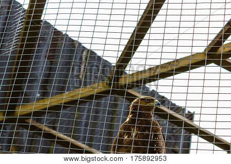 bird eagle imprisoned and captures behind metallic bars