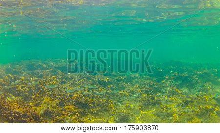 Mediterranean Sea Underwater.