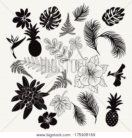 Vector collection of tropical plants leaves and flowers isolated palm fern monstera leaves collection set of tropical botanical black icon design elements