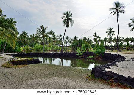Coconut Palm Trees On Mixed Sand And Lava Beach, Puuhonua O Honaunau Place Of Refuge National Park,