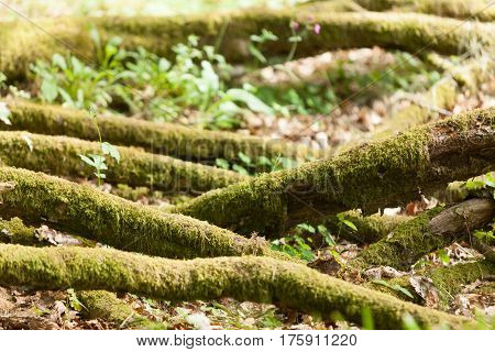 Closeup Of Green Moss On Tree Roots