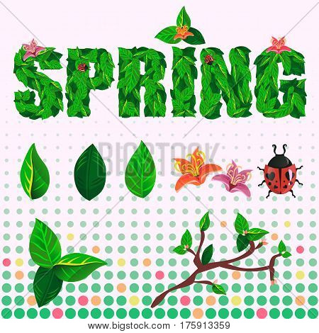 Isolated spring and summer set of text filled with leaves, flowers, just leaves, branch with burgeons and Ladybug
