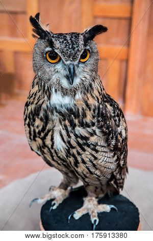 owl night bird in the forest, wildlife animal