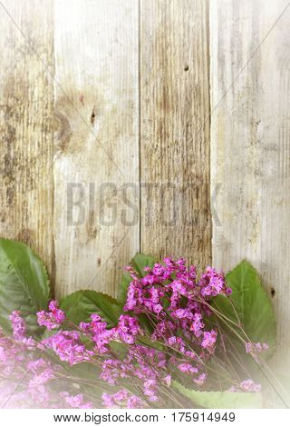 Dried flowers called broom bloom or bloom weed in pink on a rustic background. Rough wood texture. Vintage filter applied