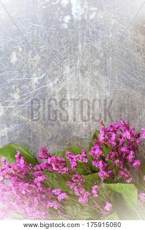 Dried flowers called broom bloom or bloom weed in pink on a rustic background. Vintage filter applied