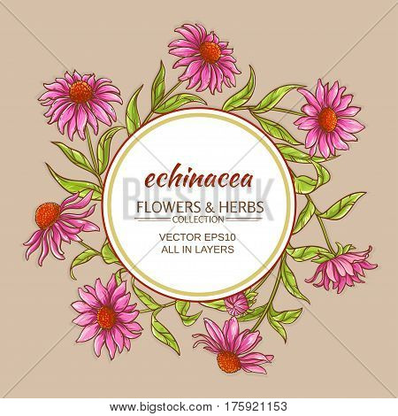 echinacea flowers vector frame on color background