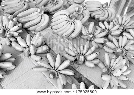 Green bananas for sale at fruit market; Koh Pha Ngan; Thailand