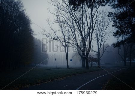 Mystic autumn morning fog in the park. Dark trunks of plants. Low visibility due to haze