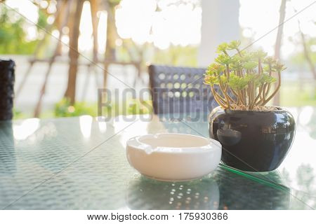 Green plastic plant in a black flower pot and white ashtray on a glass desk
