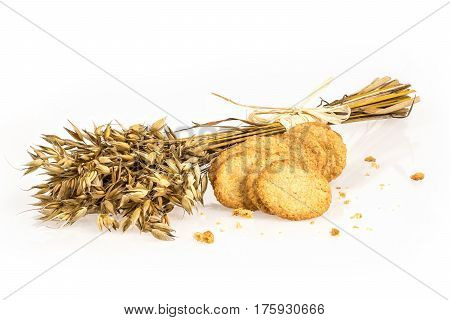 Oat bunch and cookies isolated on white background. Grain bouquet. Golden oats spikelets. Food bakery concept