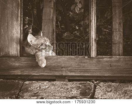 Cat taking an afternoon nap on an old wooden door.