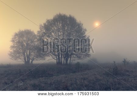 Foggy twilight with moon in sky. Scary misty night in forest. Misty night background.
