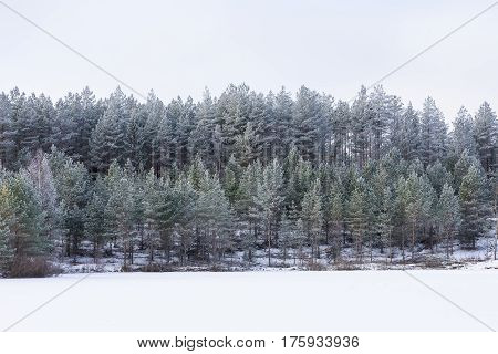 Winter in the lake. Icy cold forest. Frosty wood and ground. Freeze temperatures in nature. Snowy natural environment. Trees snow and sky.