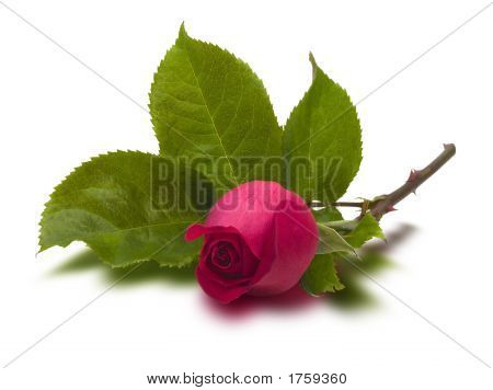 Single Red Rose On Stem (With Clipping Path)