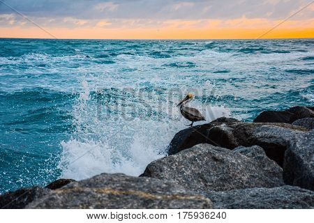 A BROWN PELICAN REACTING TO A SPLASH AS A WAKE BRAKS OVER THE ROCK ON WHICH IT IS SITTING