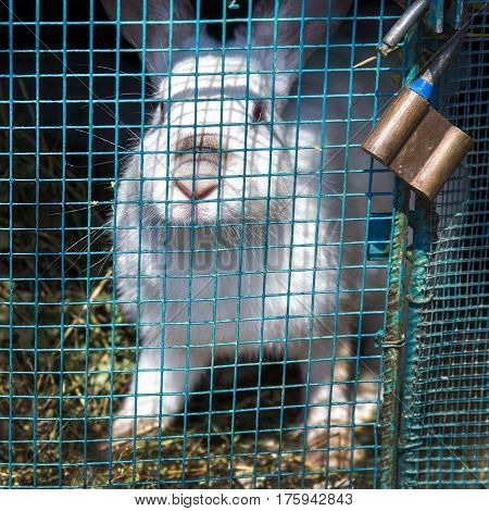 White rabbit sits in a cage behind a grid