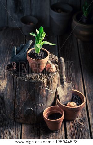 Young Green Plants And Old Gardening Tools