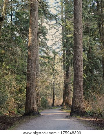 Tranquil spring forest landscape with pathway through lush green foliage and tall trees. Sunlight and shadows along trail between tall trees.