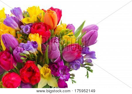bouquet of bright spring flowers isolated on white background
