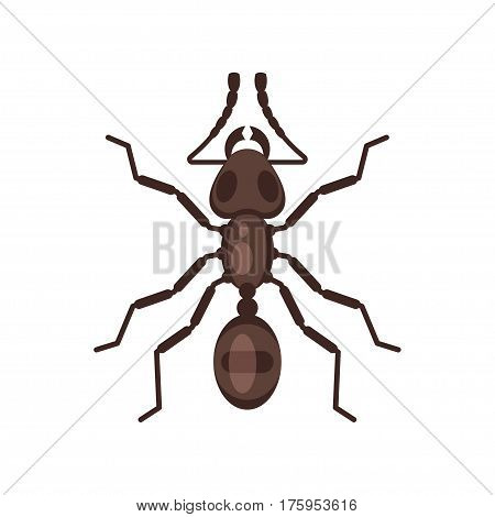 Vector flat style illustration of ant. Icon for web. Isolated on white background.