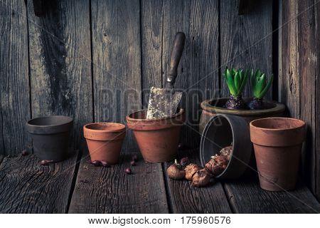 Freshly Grown Spring Flowers In An Old Wooden Workshop