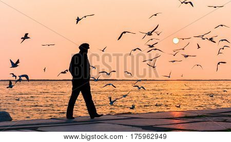 Old man walking alone near the seashore at sunset, Seagulls flying on the sea, silhouette.