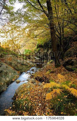 Autumn tree near a mountain river in Autumn