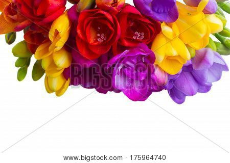 Mix of fresh freesia flowers border close up isolated on white background