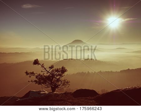 View Through Trees To Misty Valley Within Spring Daybreak. Foggy And Mist