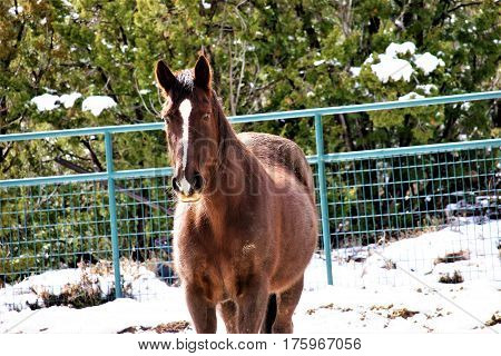 horse in corralled in the winter with snow