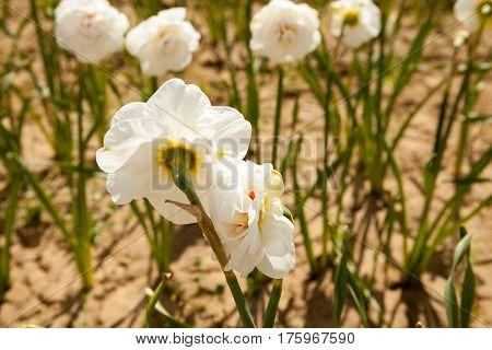 Beautiful Flowers In The Field