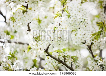 Gorgeous Tree Flowers In Blossom