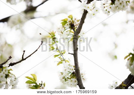 Tree Branches In Flowers