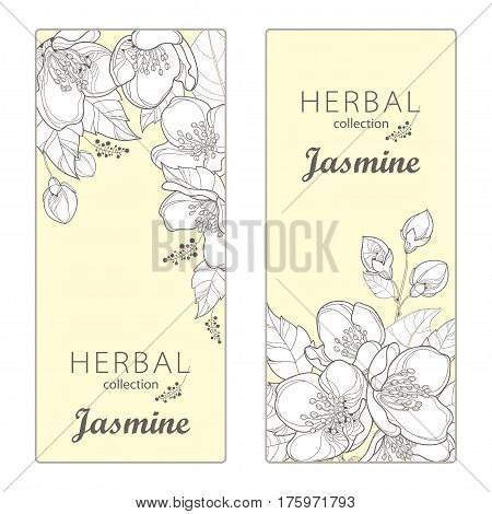 Vector vertical templates with outline Jasmine flowers, bud and leaves on the light yellow background. Floral design for poster, banner, package with bunch of jasmine flower in contour style.