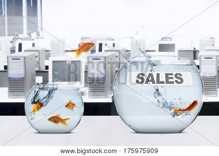 Picture of golden fish moving to larger aquarium with sales word shot in office