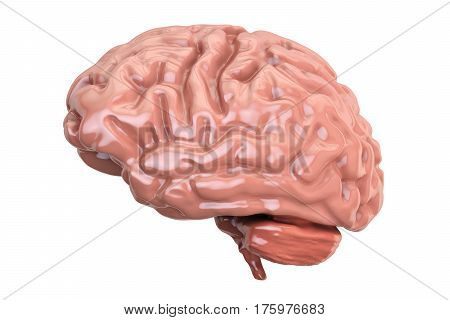 Human Brain 3D rendering isolated on white background