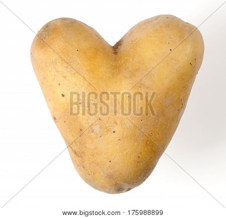 Heart shaped potato on white background. Edible tuber of nightshade Solanum tuberosum, a starchy crop. Isolated macro food photo close up from above.