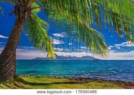 Palm tree on the beach on Tahiti with the view of Moorea Island, French Polynesia