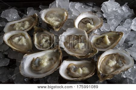 Fresh Oysters on the half shell with horseradish