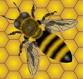 Raster version of vector seamless of bee (contain the Clipping Path of the object and details) poster