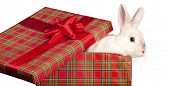 Image of fluffy rabbit in gift box with red bow poster