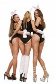Three sexy playgirls in bunny costumes isolated on white poster