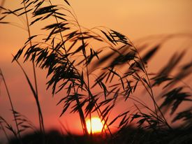 Sillouette Sunset