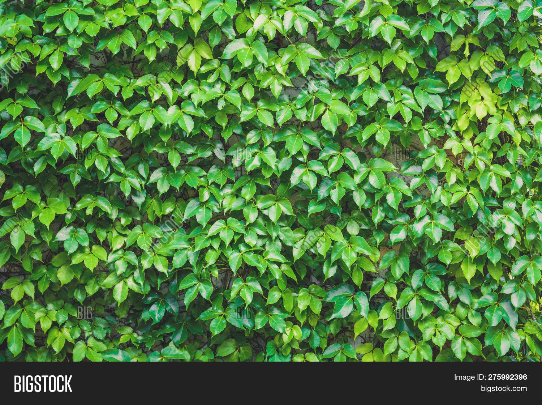 Vertical Garden Green Image Photo Free Trial Bigstock