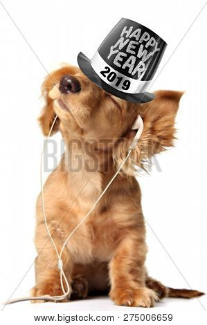 Young longhair dachshund puppy listening to music on earbuds and wearing a Happy New Year top hat.