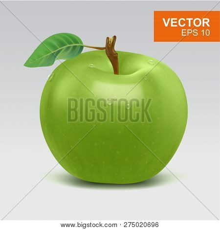 Realistic Whole Green Apple Vector Clipart, Icon, Mockup With Green Leaf And Water Drop. Illustratio